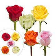 Rainforest Alliance Certified Roses, 125 Stems - Fiesta Assorted