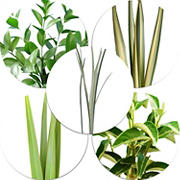 Ruscus/Viburnum/Lily Grass/Flax, 250 Stems - Assorted
