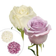 Roses and Petals Combo Box, 50/25/2,000 pk. -  White, Lavender