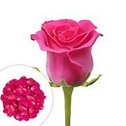 Roses and Petals Combo Box, 75/2,000 pk. - Hot Pink
