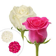 Roses and Petals Combo Box, 50/25/2,000 pk. - Hot Pink, White