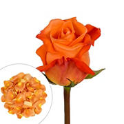 Roses and Petals Combo Box, 75/2,000 pk. - Orange