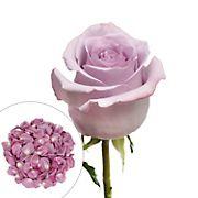 Roses and Petals Combo Box, 75/2,000 pk. - Lavender