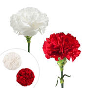 Carnation Wedding Assortment, 100/100 Stems - White, Red