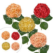 Painted Hydrangeas, 26 Stems - Fall Assortment
