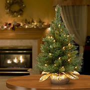 """National Tree Company 24"""" Majestic Fir Tree in Gold Base - Clear"""