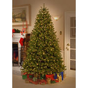 National Tree Company 7.5' Down Swept Douglas Fir Tree - Dual Color