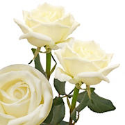White Garden Roses, 36 Stems