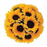 Yellow Sunflowers, 40 stems