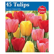 GSB Tulip and Daffodil Bulbs for Spring Bloom - Assorted