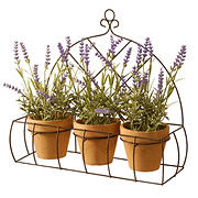 National Tree Company 4-Pc. Potted Lavender Plants in Decorative Rack