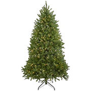 Northlight 6.5' Pre-Lit Full Northern Pine Artificial Christmas Tree - Warm Clear LED Lights