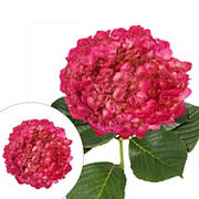 Hand Panted Metallic Hot Pink Hydrangeas, 26 Stems