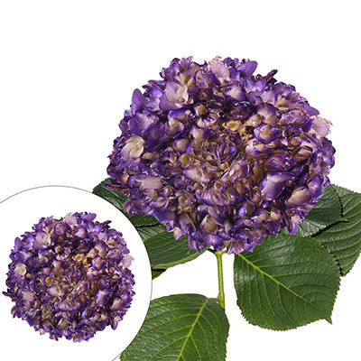 Hand Painted Metallic Purple Hydrangeas, 26 Stems