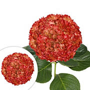 Hand Painted Metallic Red Hydrangeas, 26 Stems