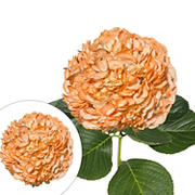 Hand-Painted Hydrangeas, 26 Stems - Orange