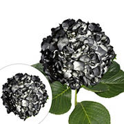 Hand-Painted Hydrangeas, 26 Stems - Black
