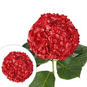 Hand-Painted Hydrangeas, 26 Stems - Red