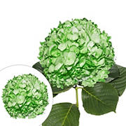 Hand-Painted Hydrangeas, 26 Stems - Green
