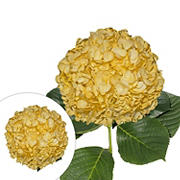 Hand-Painted Hydrangeas, 26 Stems - Yellow