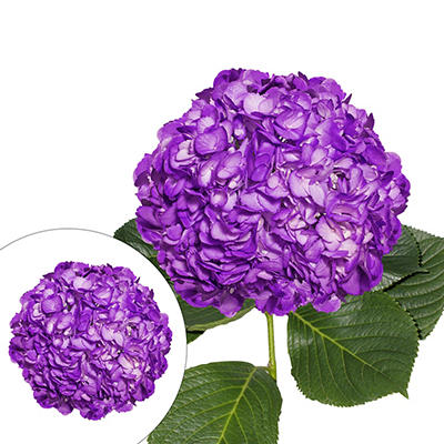 Hand-Painted Hydrangeas, 26 Stems - Purple