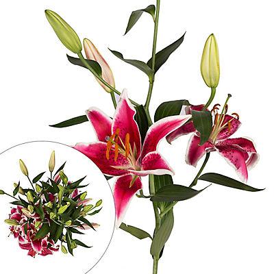Rainforest Alliance Starfighter Oriental Lilies, 60 Stems - Pink