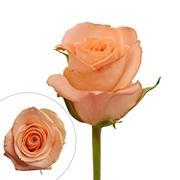 Rainforest Alliance Certified Roses, 125 Stems - Peach