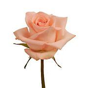 Rainforest Alliance Certified Roses, 125 Stems - Peach