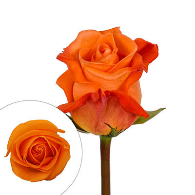 Rainforest Alliance Certified Roses, 125 Stems - Orange